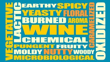 Drink alcohol beverage. Wine tastes relative words cloud. Vector illustration