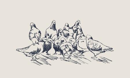 La bandada de palomas come comida en el suelo. Ilustración de vector