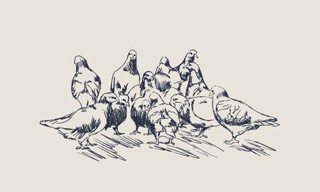 The flock of pigeons eats food on the ground Illustration