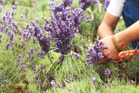 The Lavender also picked