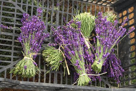 branches of lavender