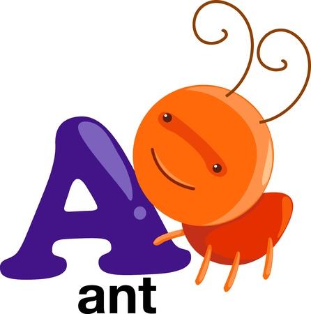 animal alphabet: animal alphabet letter-a