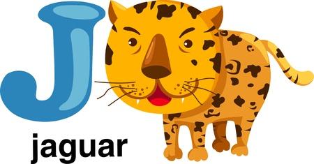 alfabeto con animales: animales alfabeto letra-j