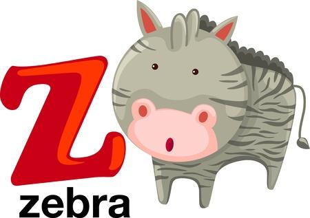 animal alphabet: animal alphabet letter-z