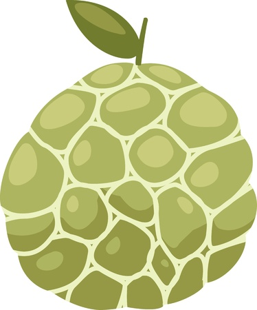 custard apple fruit: illustration Custard apple vector file on White background  Illustration