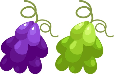 illustration Grape vector file on White background  Vector