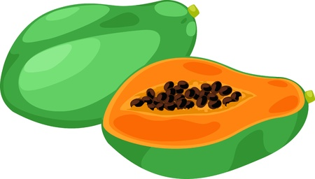 illustration papaya vector on White background
