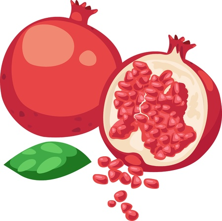 half full: illustration Pomegranate Fruit vector on White background
