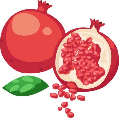 fruta tropical: ilustraci�n vectorial fruta de la granada en el fondo blanco Vectores