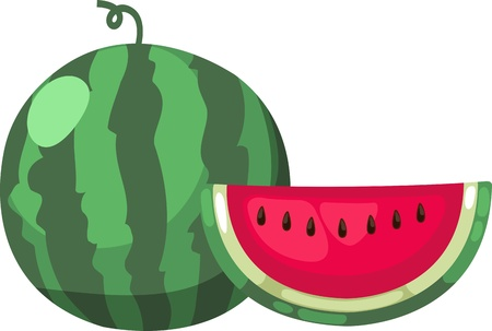 water melon: illustration watermelon vector on White background