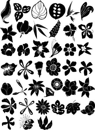 bali: Illustration collection beautiful flowers