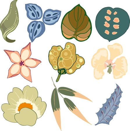 Illustration collection beautiful flowers Vector