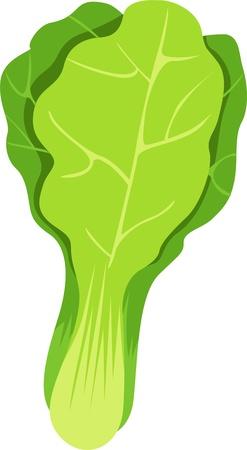 illustration vegetables Vector