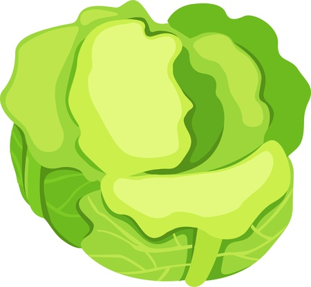 illustration vegetables Vector