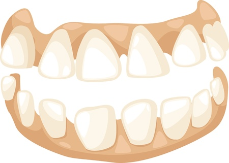 cartoon teeth illustration Vector