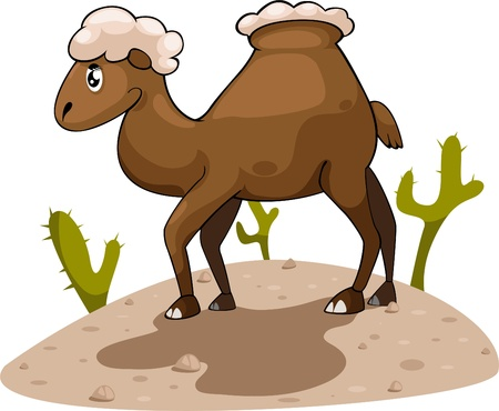 illustration cartoon Camel Vector