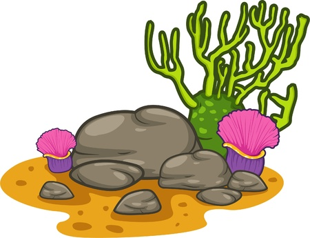 sea anemone: illustration coral