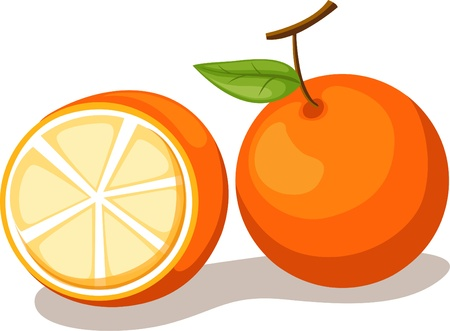 illustration orange vector Vector