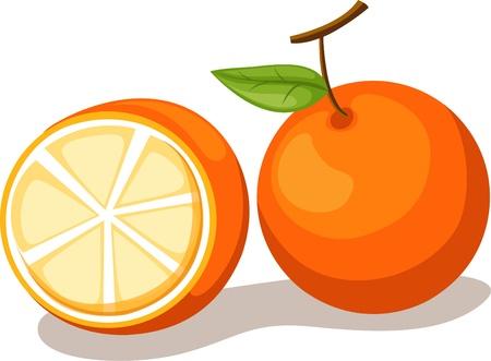 zanahoria: ilustración vectorial de naranja