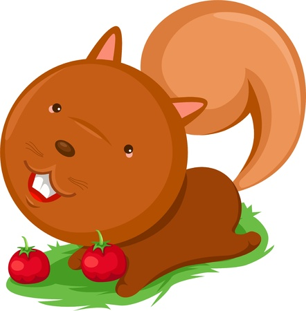 squirrel cartoon vector illustrations  Vector