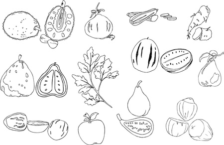 bitter fruit: jack fruit onion zucchini yam uglifruit coriander fig watermelon quince walnut apple nut isolated illustration vector Illustration