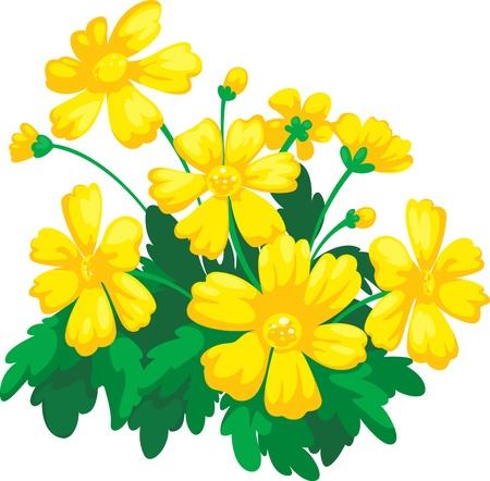 gerber daisy: Flower vector illustration