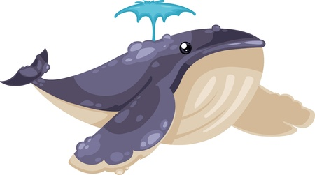 whale underwater: Whale vector illustration