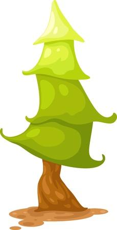 conifer: Pine tree  Illustration