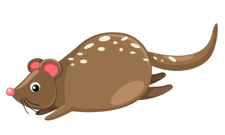 terrestrial mammal: Quoll isolated on white background vector