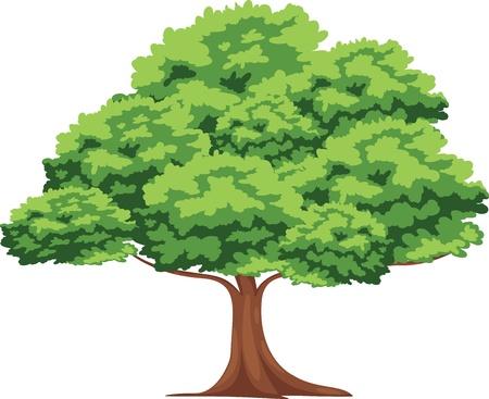 single tree: Tree vector Illustration