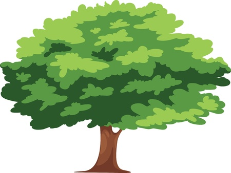 landscaped garden: Tree vector Illustration