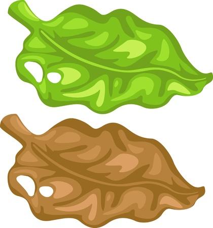 illustration of isolated cartoon leaf vector Stock Vector - 17623536