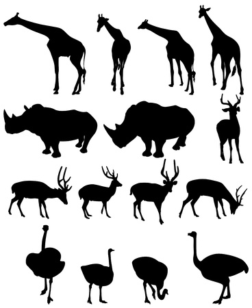 wildlife reserve: illustration of isolated giraffe,rhinoceros,deer,ostrich  vector