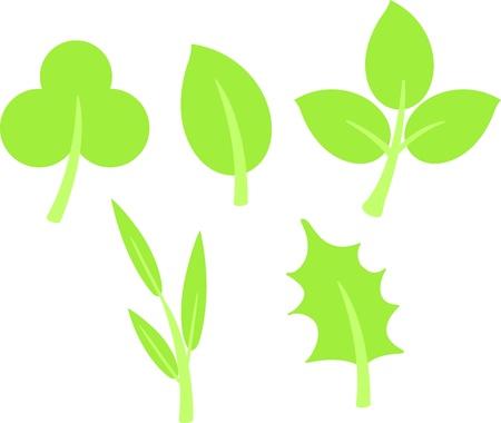 green leaves  Vector illustration  on white background Stock Vector - 17623557