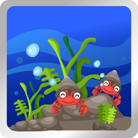 conch: Illustration of a hermit crab underwater background  Illustration