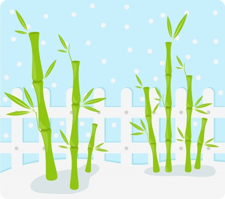 bamboo Background illustration Vector