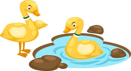 llustration of isolated duck family on white background vector Vector