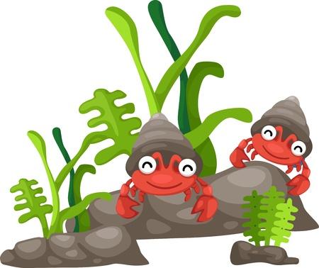 hermit: Illustration of hermit crab white background  Illustration