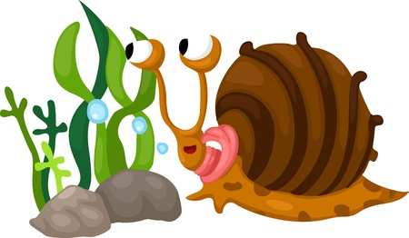 sea creatures: Illustration of snail white background