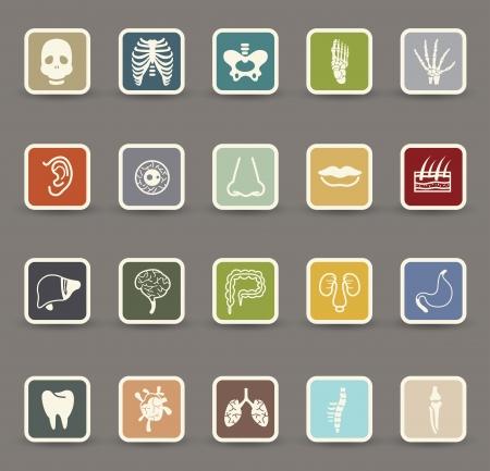 Menschliche Anatomie Symbole