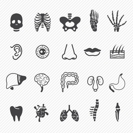 Human anatomy icons Stock Vector - 25041975