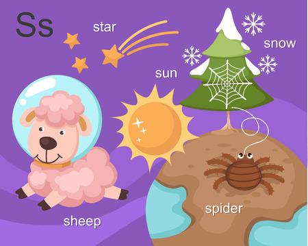 sun s: Alphabet S lettera stella, sole, pecore, ragno, neve Vettoriali