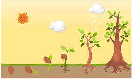 sementi: Ciclo di vita del vettore albero Vettoriali
