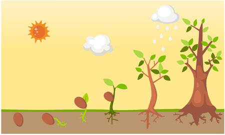 saplings: Tree life cycle vector
