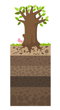 Layer of soil beneath the tree