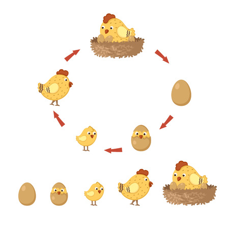 cycle chicken Vector