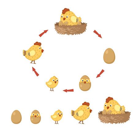 pollo caricatura: pollo ciclo Vectores