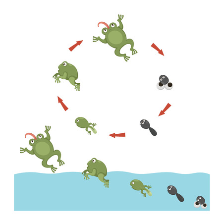 spawn: Life cycle of Frog Illustration