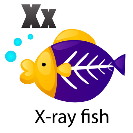 computer education: Alphabet X with X-ray fish