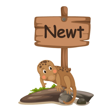 alphabet kids: animal alphabet letter N for newt illustration vector Illustration